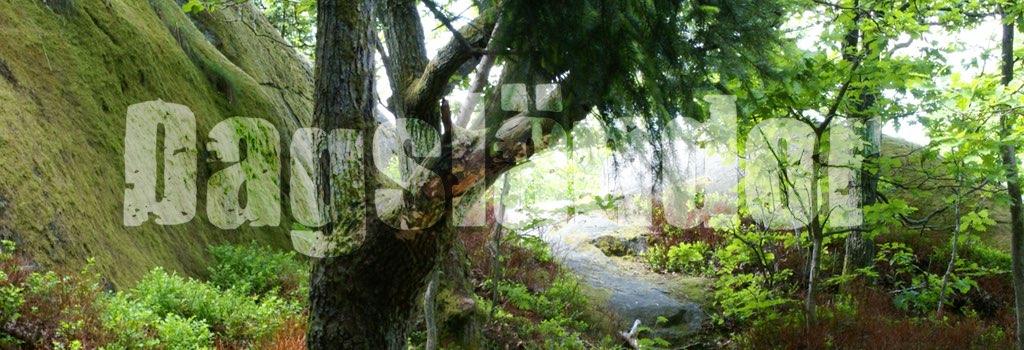 ds_slottsskogen_skog